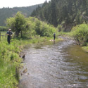 working a side channel for brown trout