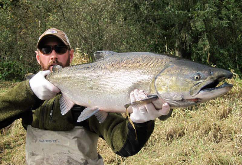 chrome buck chinook salmon