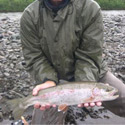 jay with nice hen rainbow